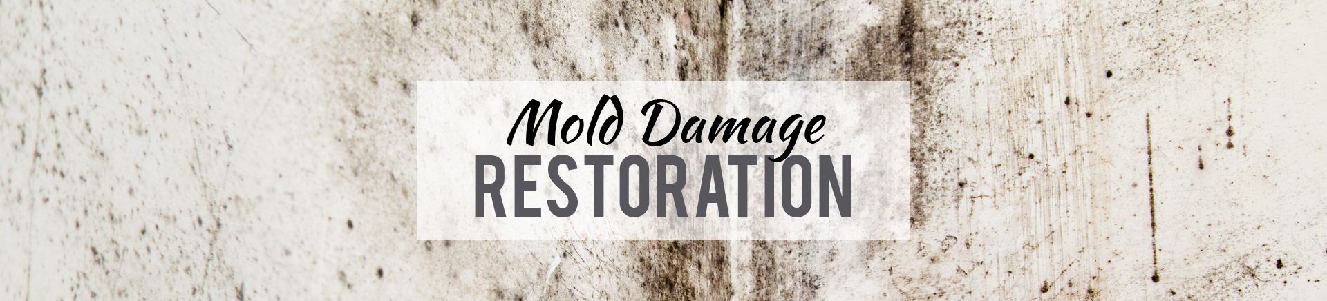 mold remedition