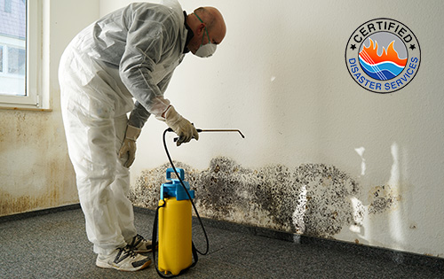 Mold Remediation: Taking Away That Gross Mold and its Effect!