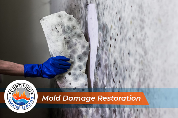 Signs You Need Mold Damage Restoration in Ogden UT