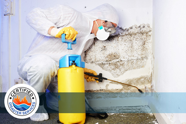 Why You Need a Mold Abatement Company After a Flood