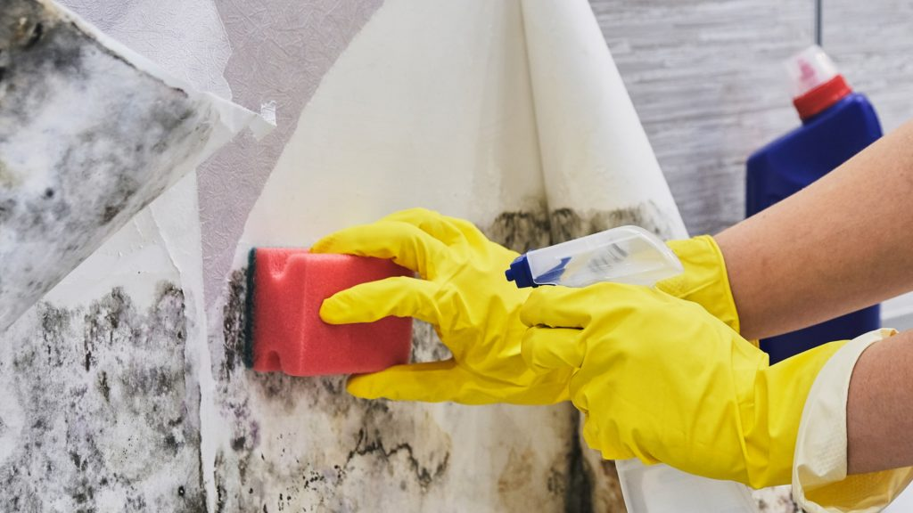 Mold Remediation Companies UT